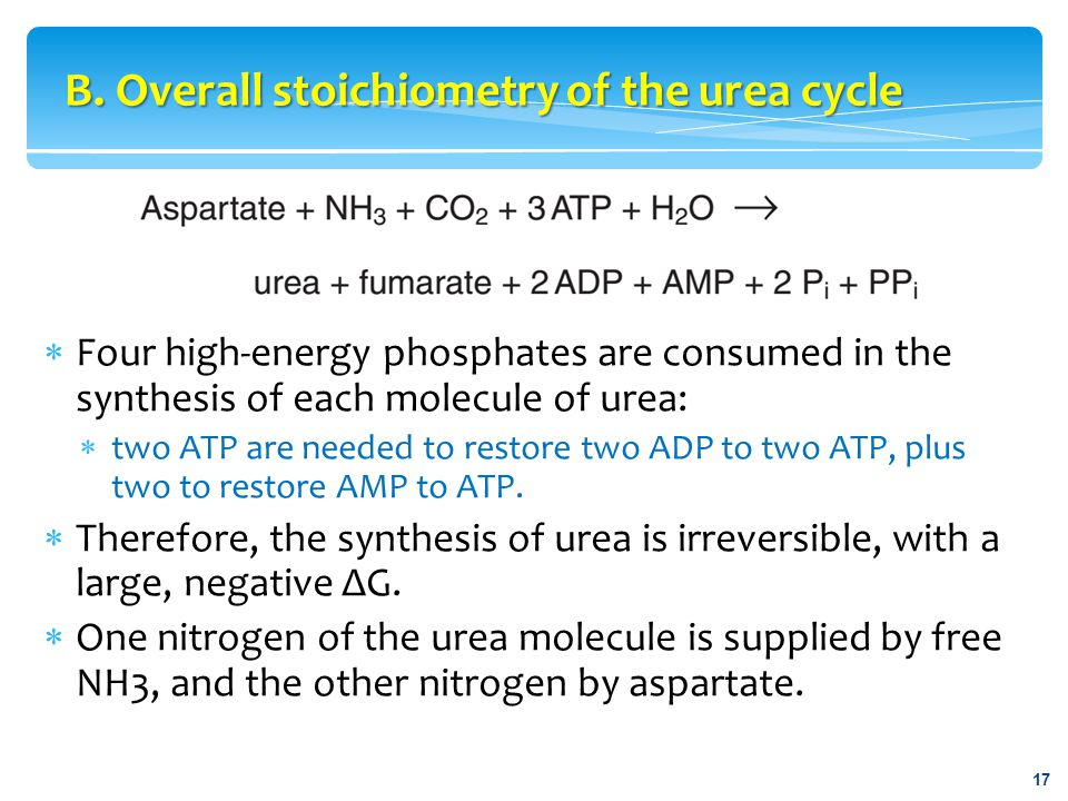 B. Overall stoichiometry of the urea cycle