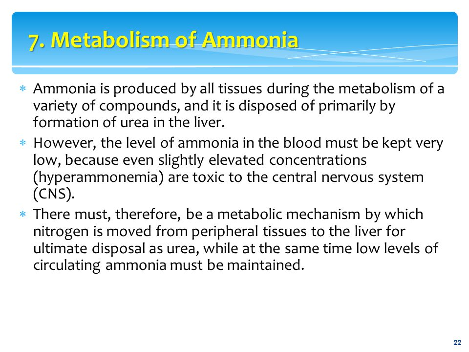 7. Metabolism of Ammonia