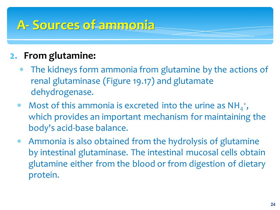 A- Sources of ammonia From glutamine: