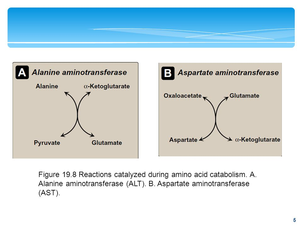 Figure 19. 8 Reactions catalyzed during amino acid catabolism. A