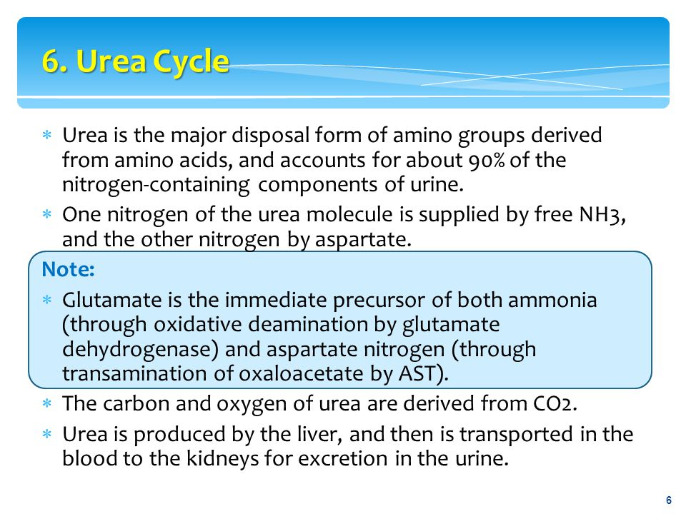 6. Urea Cycle