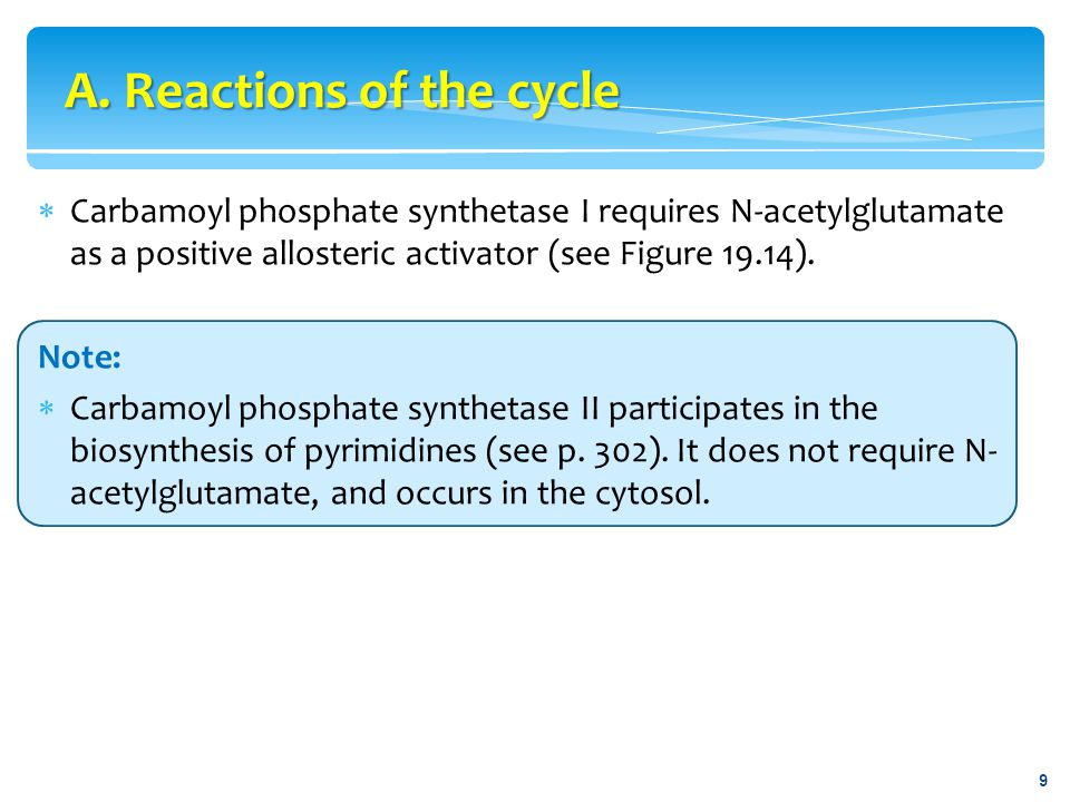 A. Reactions of the cycle
