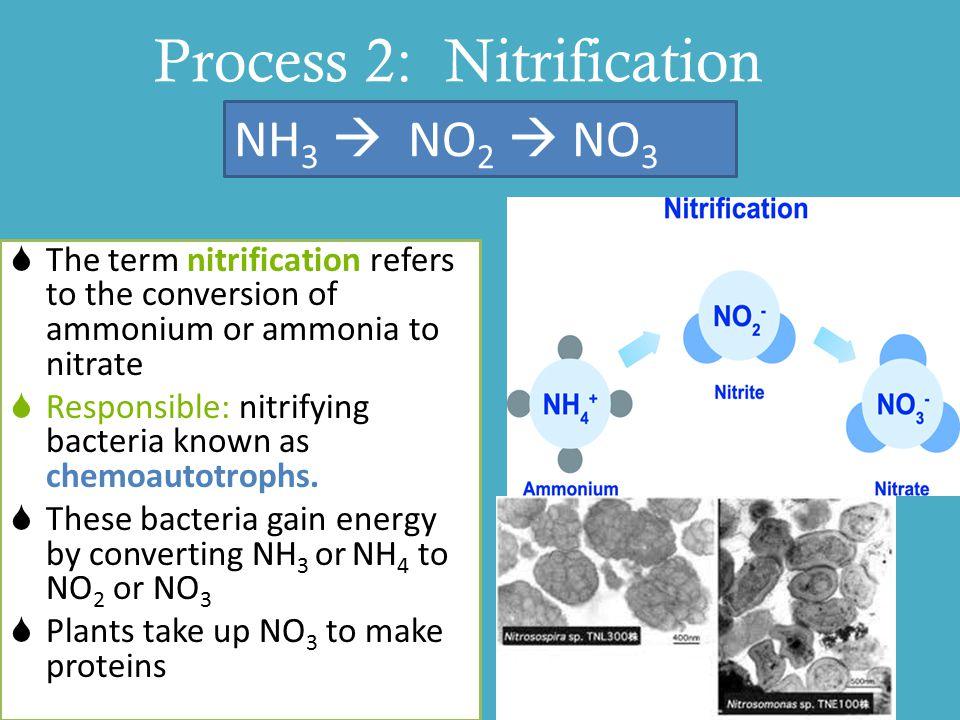 Process 2: Nitrification
