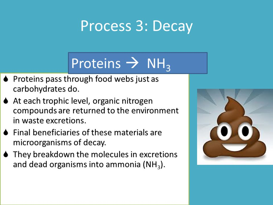 Process 3: Decay Proteins  NH3