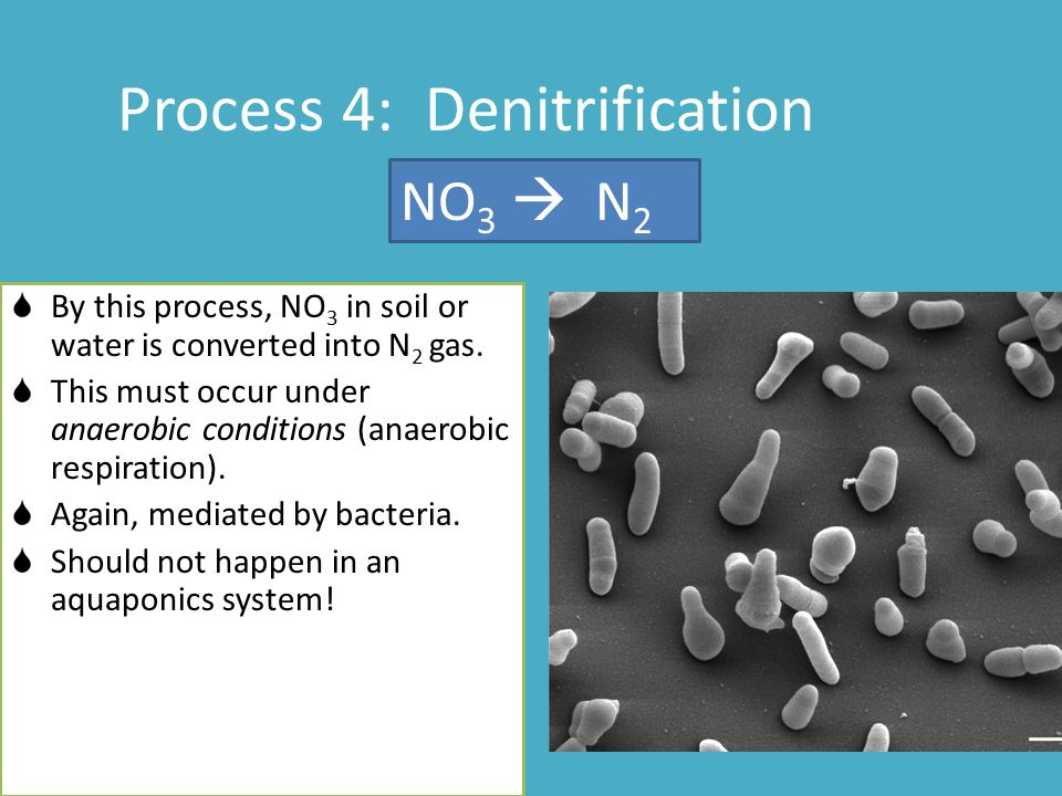 Process 4: Denitrification