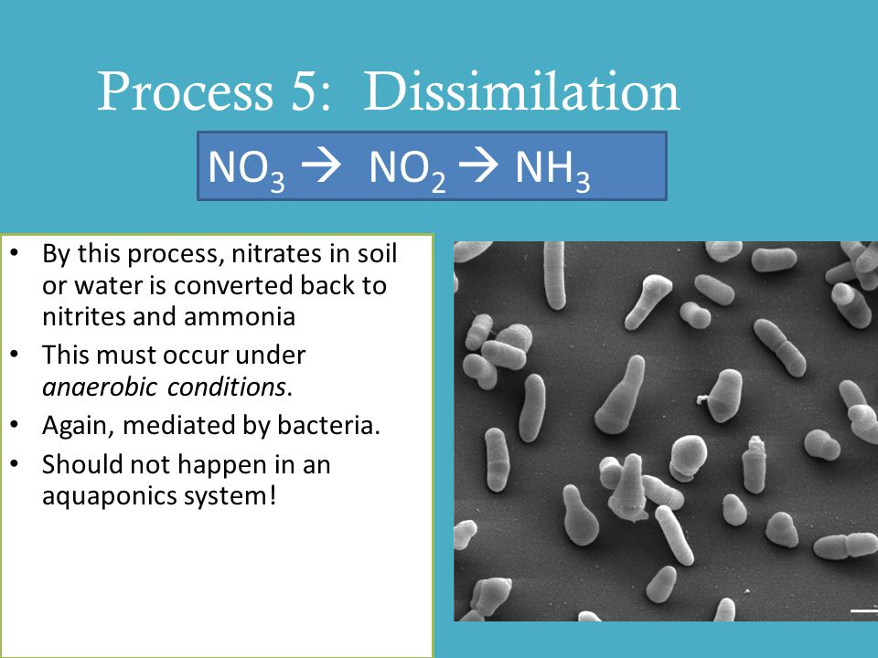 Process 5: Dissimilation