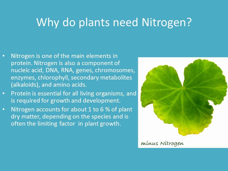 Why do plants need Nitrogen