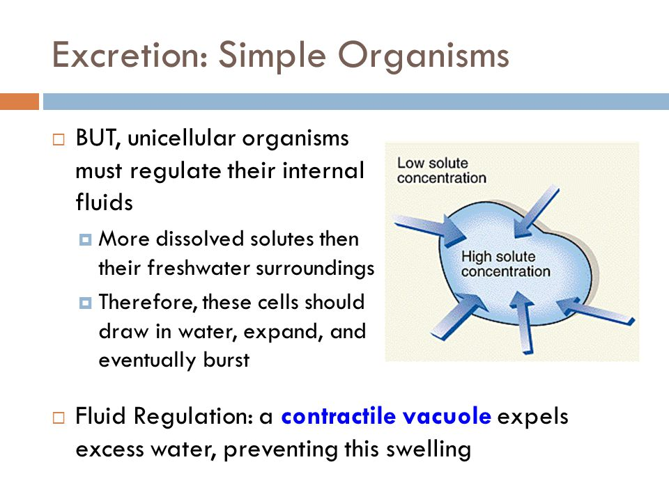 Excretion: Simple Organisms