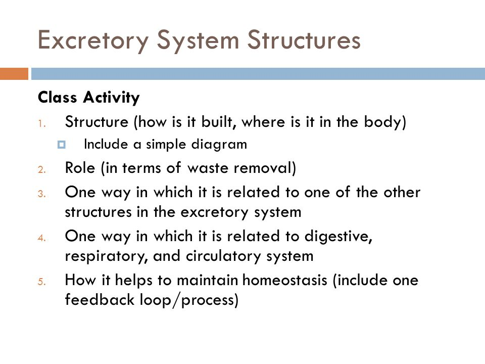 Excretory System Structures