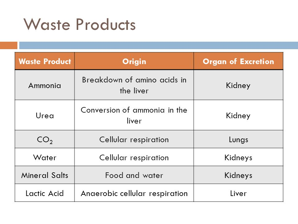 Waste Products Waste Product Origin Organ of Excretion Ammonia