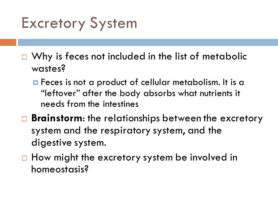 Excretory System Why is feces not included in the list of metabolic wastes