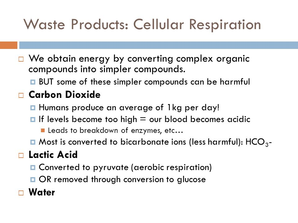 Waste Products: Cellular Respiration