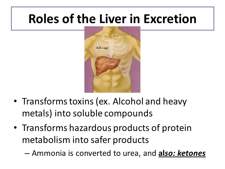 Roles of the Liver in Excretion