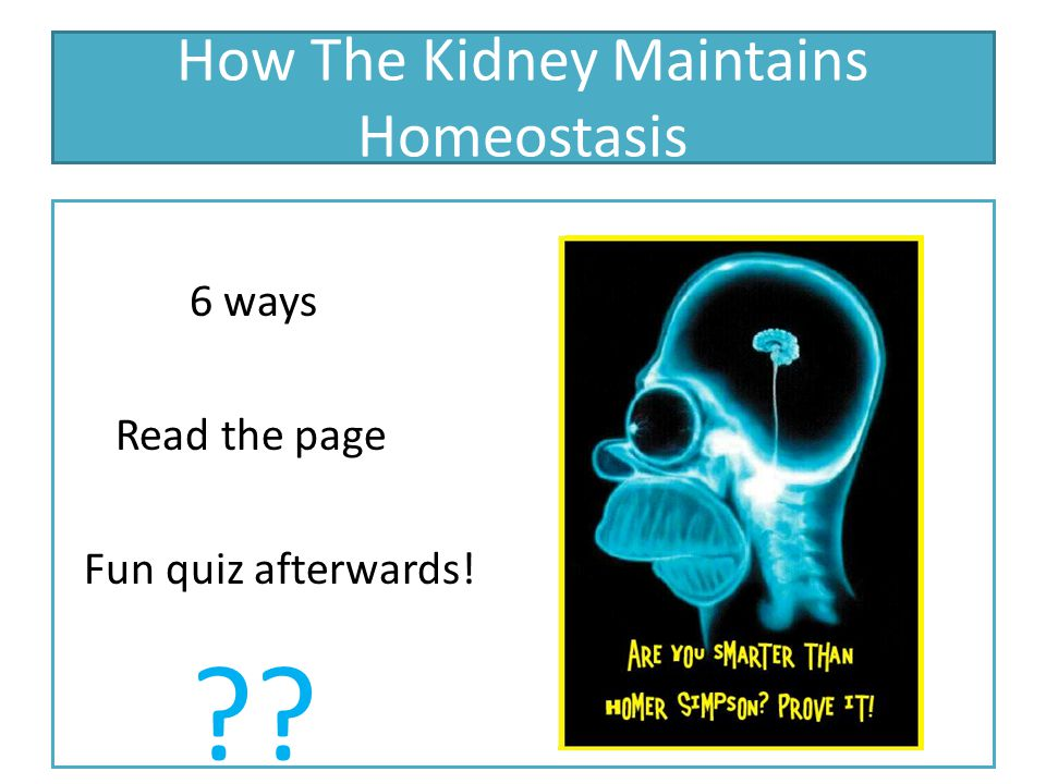 How The Kidney Maintains Homeostasis