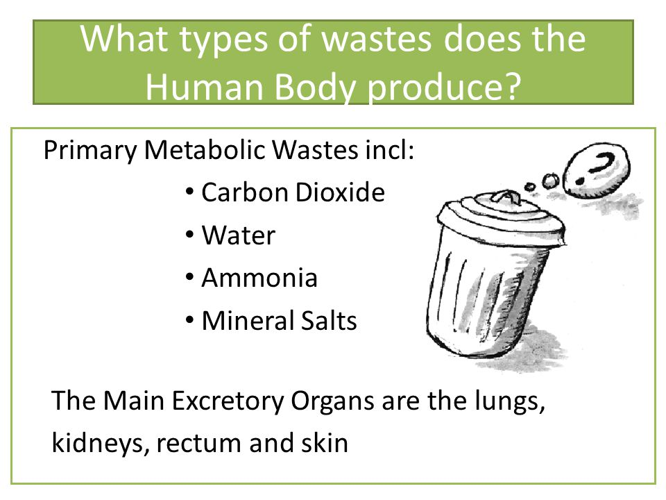 What types of wastes does the Human Body produce