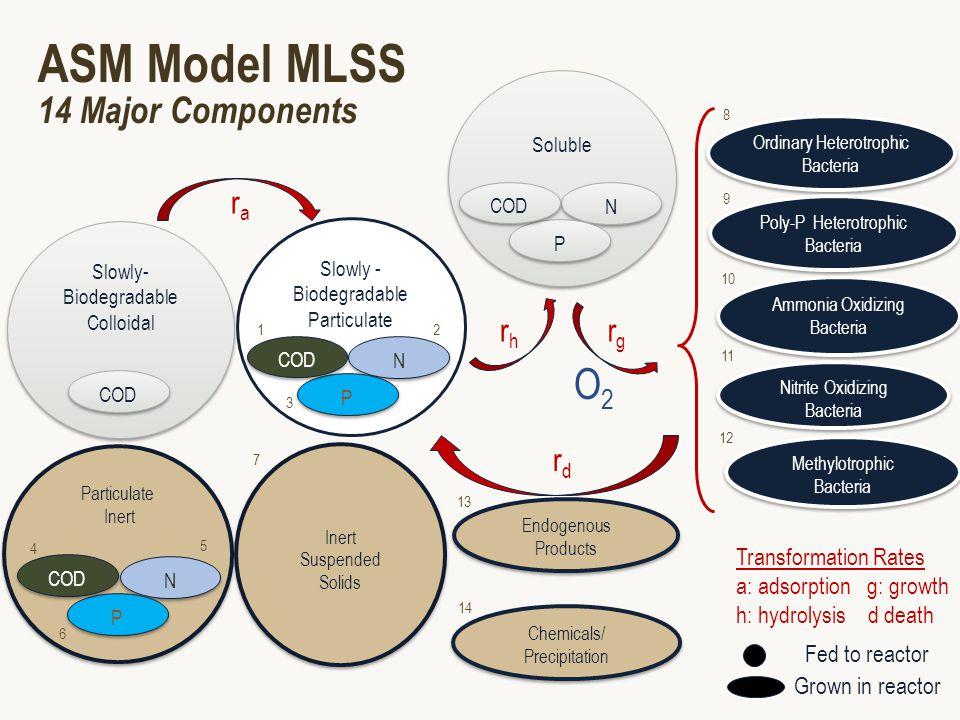 ASM Model MLSS 14 Major Components