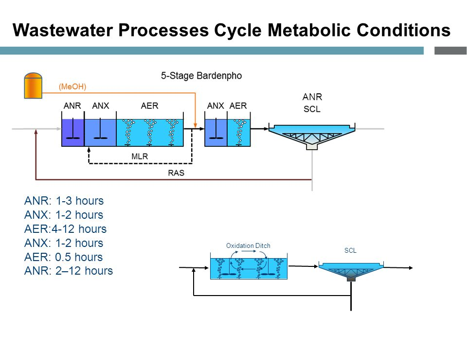 Wastewater Processes Cycle Metabolic Conditions