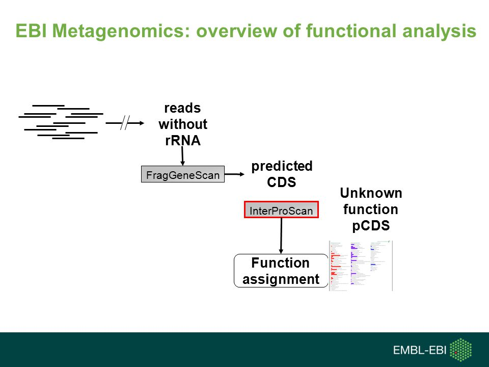 EBI Metagenomics: overview of functional analysis