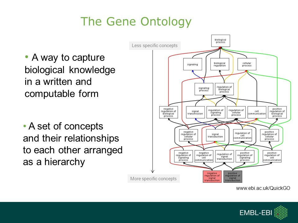 The Gene Ontology A way to capture biological knowledge