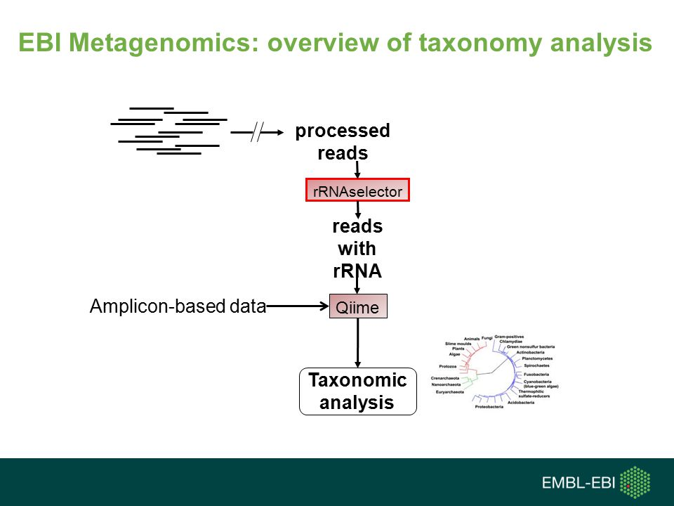 EBI Metagenomics: overview of taxonomy analysis
