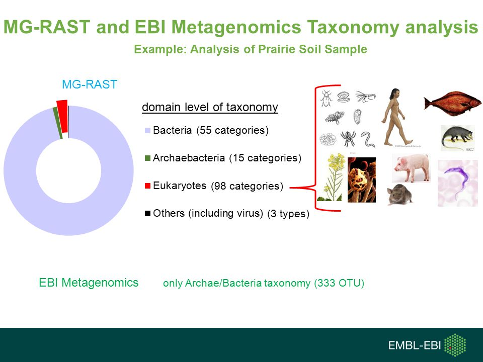 MG-RAST and EBI Metagenomics Taxonomy analysis
