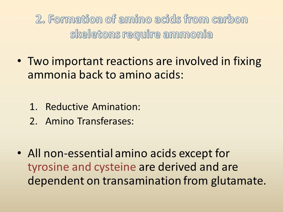 2. Formation of amino acids from carbon skeletons require ammonia