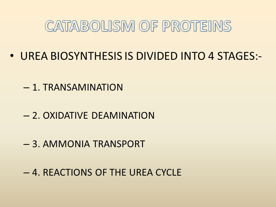 CATABOLISM OF PROTEINS