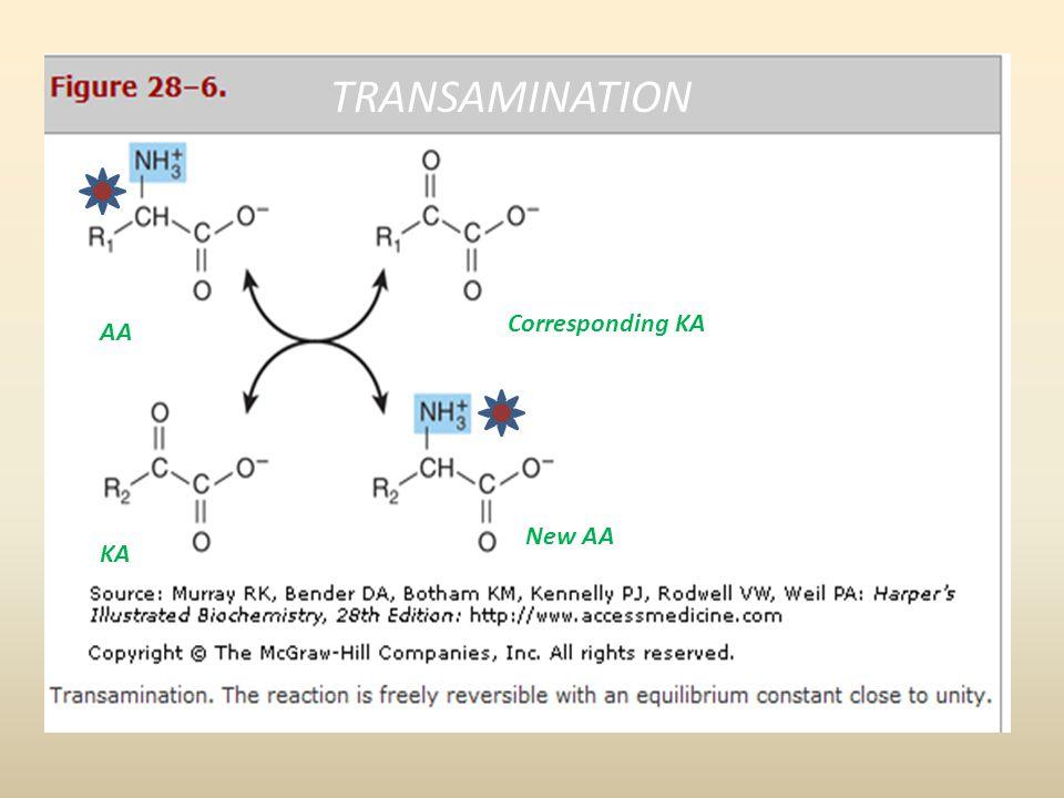 TRANSAMINATION Corresponding KA AA New AA KA