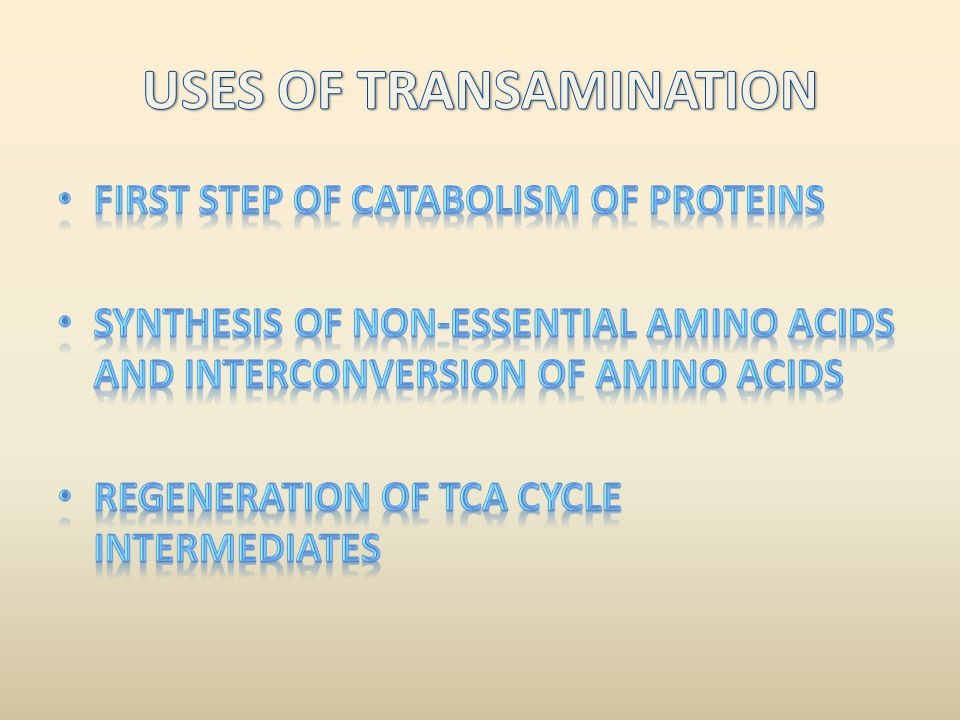 USES OF TRANSAMINATION