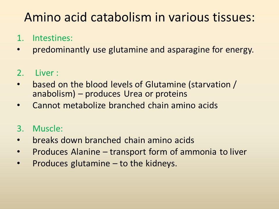 Amino acid catabolism in various tissues:
