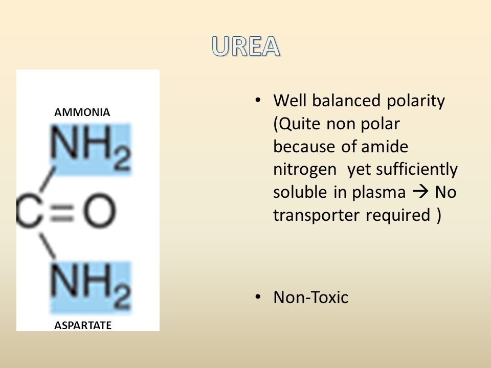 UREA Well balanced polarity (Quite non polar because of amide nitrogen yet sufficiently soluble in plasma  No transporter required )