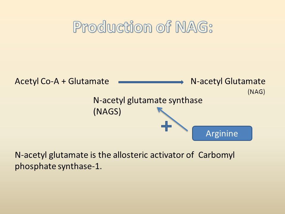 Production of NAG: Acetyl Co-A + Glutamate N-acetyl Glutamate