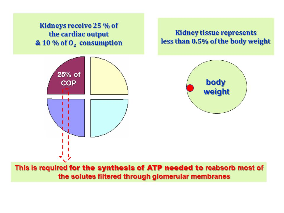 Kidneys receive 25 % of the cardiac output & 10 % of O2 consumption
