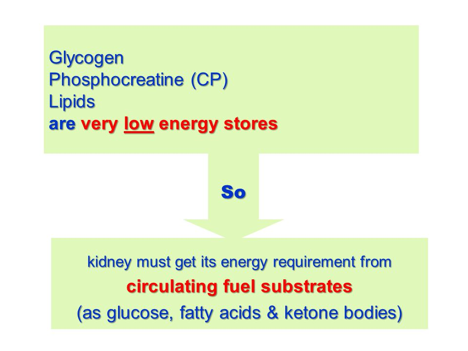 Glycogen Phosphocreatine (CP) Lipids are very low energy stores