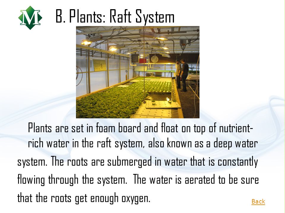 B. Plants: Raft System Plants are set in foam board and float on top of nutrient-rich water in the raft system, also known as a deep water.