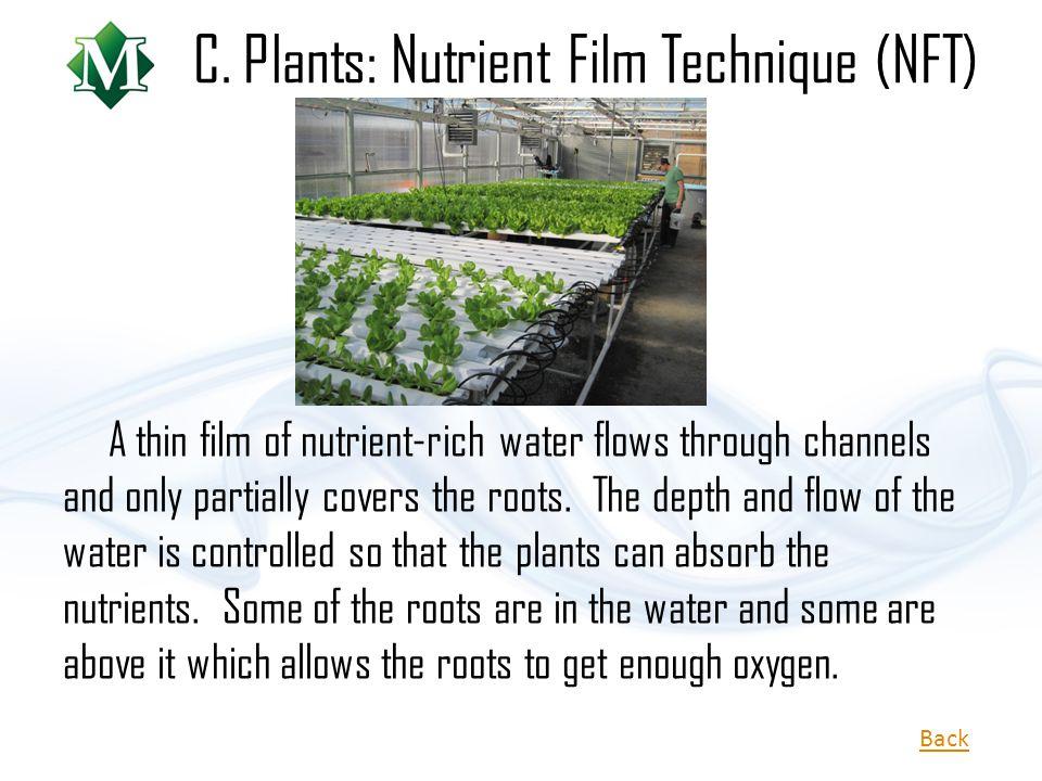 C. Plants: Nutrient Film Technique (NFT)
