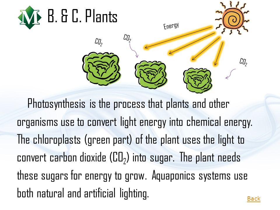 B. & C. Plants Energy. CO2. CO2. CO2.