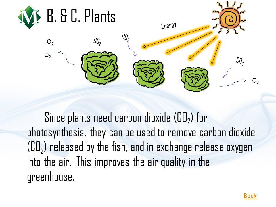 B. & C. Plants Energy. CO2. O2. CO2. O2. CO2. O2.