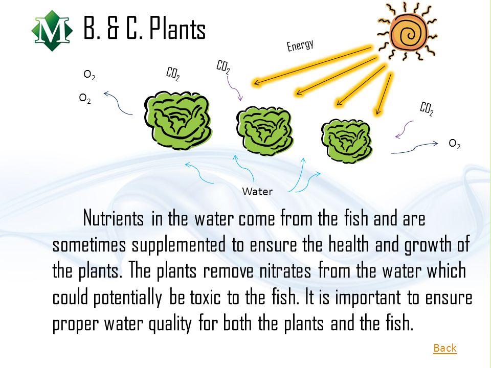 B. & C. Plants Energy. CO2. O2. CO2. O2. CO2. O2. Water.