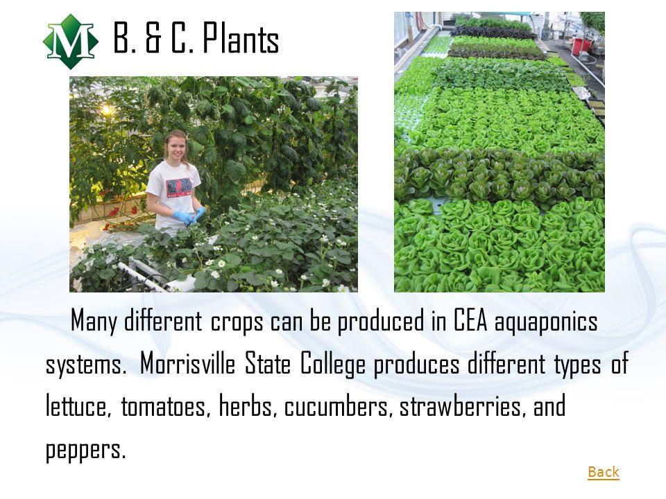 B. & C. Plants
