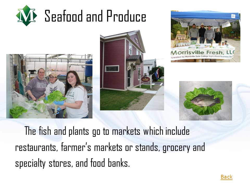Seafood and Produce