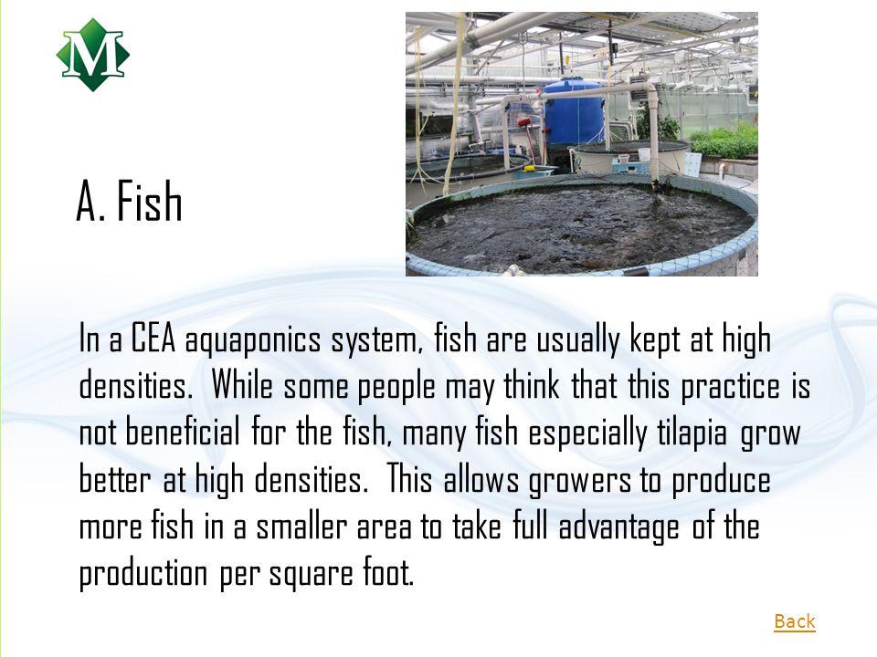 A. Fish