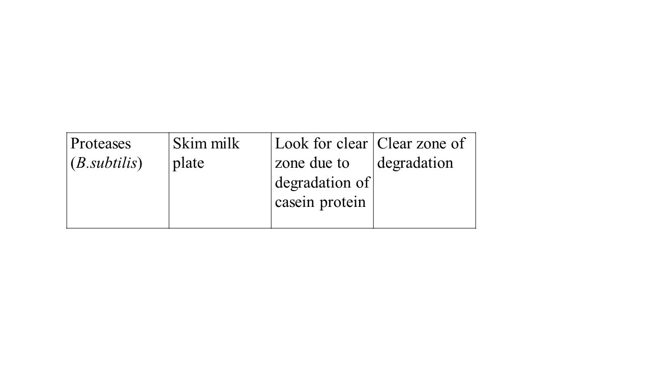 Proteases (B.subtilis) Skim milk plate. Look for clear zone due to degradation of casein protein.