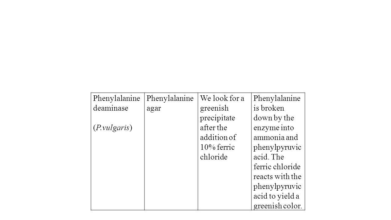 Phenylalanine deaminase
