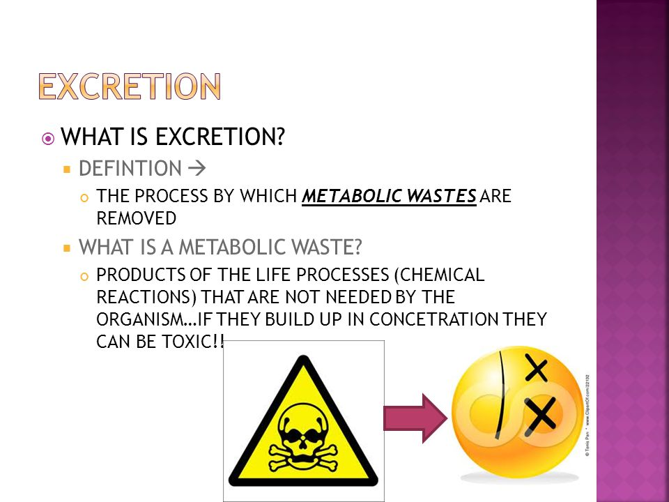 EXCRETION WHAT IS EXCRETION DEFINTION  WHAT IS A METABOLIC WASTE