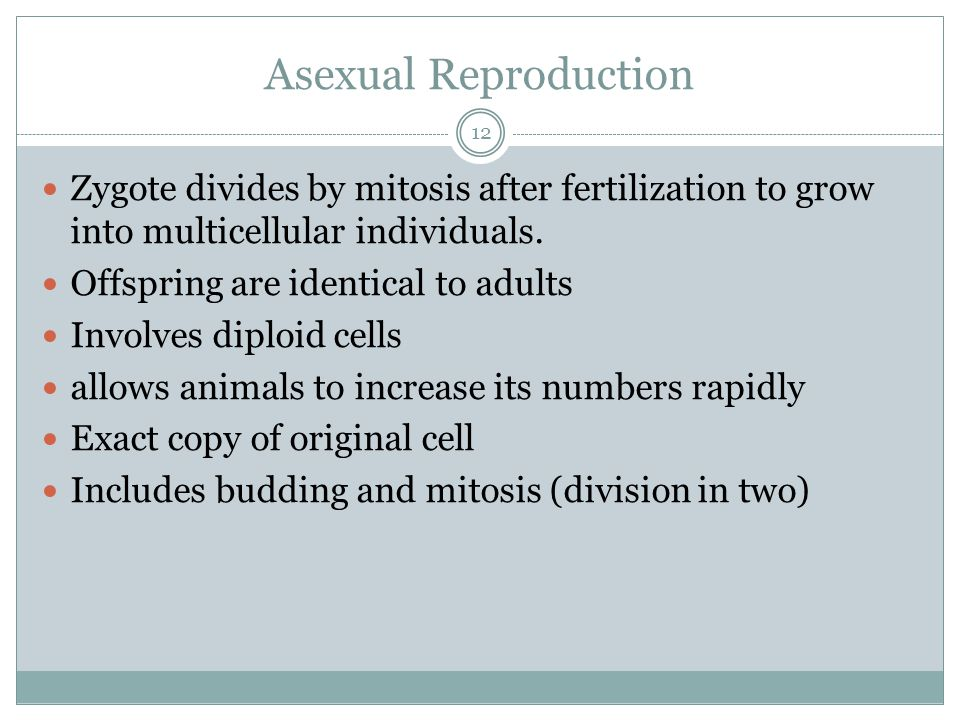 Asexual Reproduction Zygote divides by mitosis after fertilization to grow into multicellular individuals.