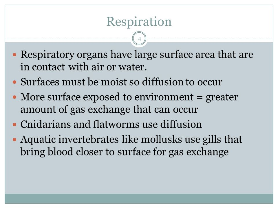 Respiration Respiratory organs have large surface area that are in contact with air or water. Surfaces must be moist so diffusion to occur.