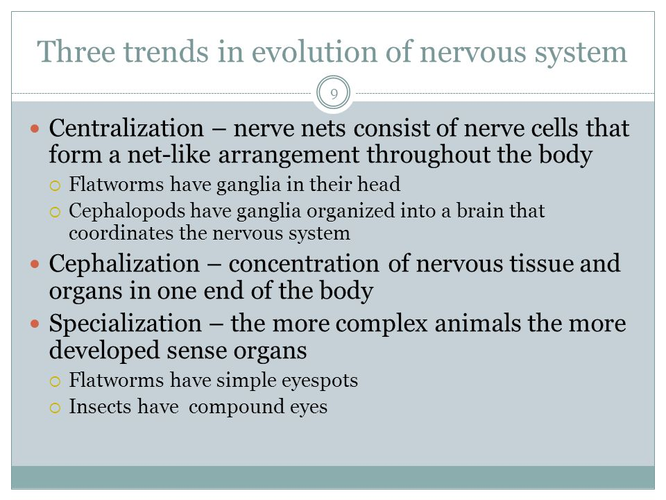 Three trends in evolution of nervous system