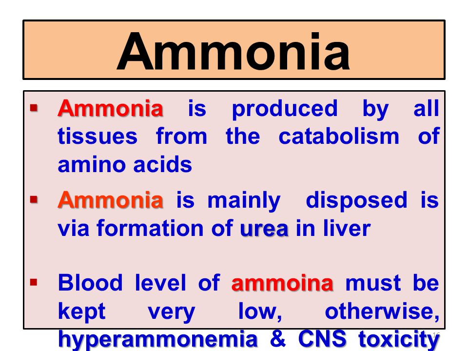 Ammonia Ammonia is produced by all tissues from the catabolism of amino acids. Ammonia is mainly disposed is via formation of urea in liver.