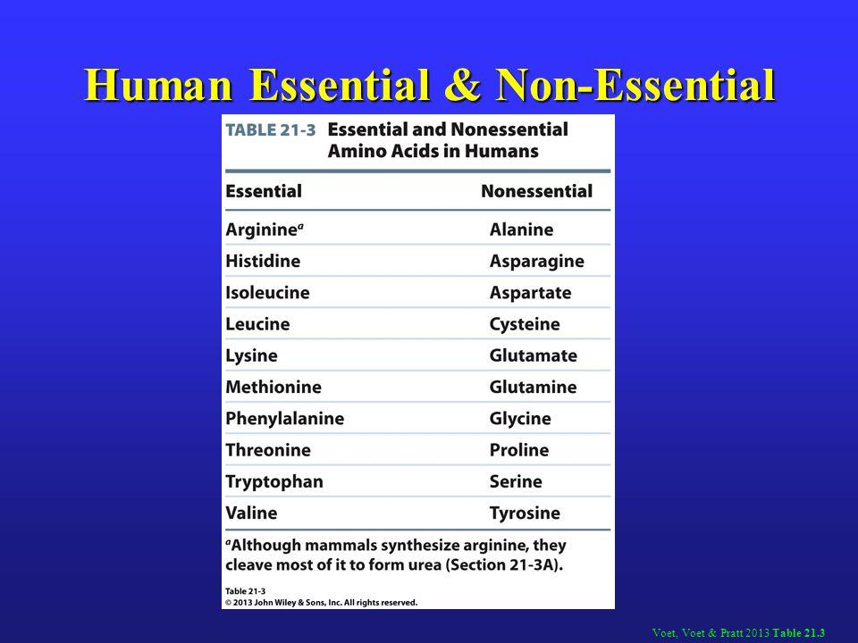 Human Essential & Non-Essential Amino Acid
